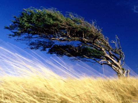 Khai thác năng lượng gió từ chuyển động của cây cối